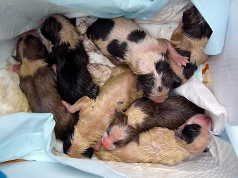 История спасения щенков, которых бросили умирать в траву