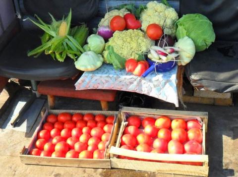 Полезные советы для огородников