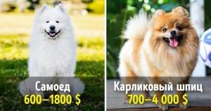 19 великолепных собак, котор…