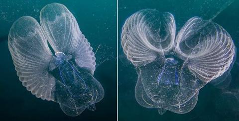 Океанологи поймали редчайшее…