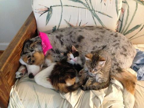 20+ заботливых мамочек, кото…