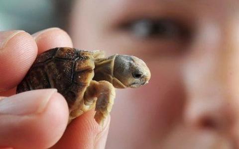 Покупка черепахи: как не ошибиться?