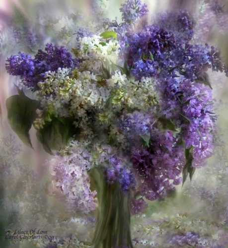 Lilacs of love