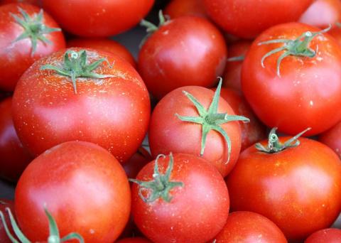 Применение трихопола для лечения помидоров и других огородных культур