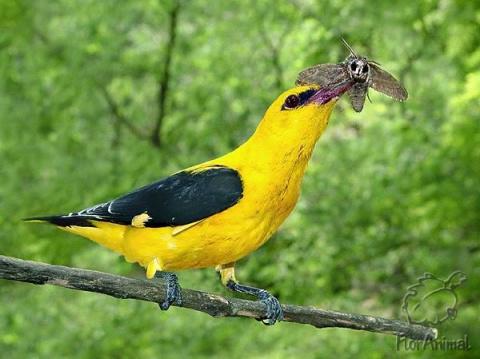 О чем говорят птицы