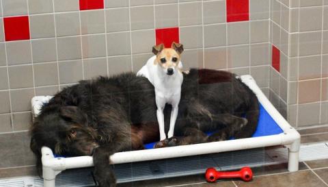 Собаки, отданные в приют, не…