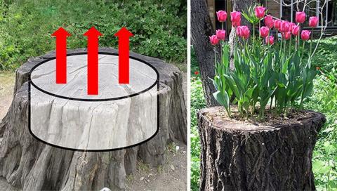 Полезная идея для садоводов и дачников: натуральная клумба в пеньке