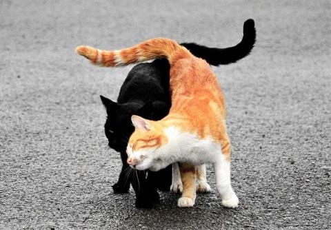 18 кошек доказывающих, что л…