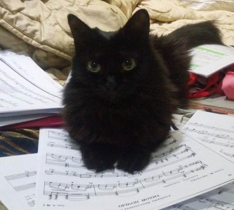 Черные кошки: развеиваем миф…