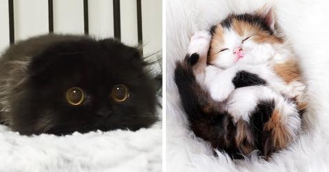 20 самых милых котят, на кот…