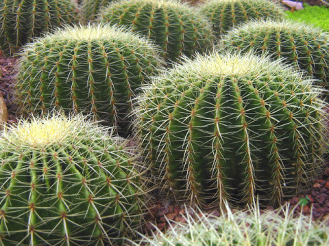 Топ 10 энергетически сильных комнатных растений, притягивающих в дом счастье