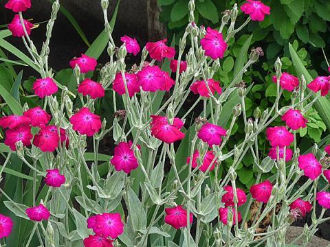 Неприхотливые цветы для новы…