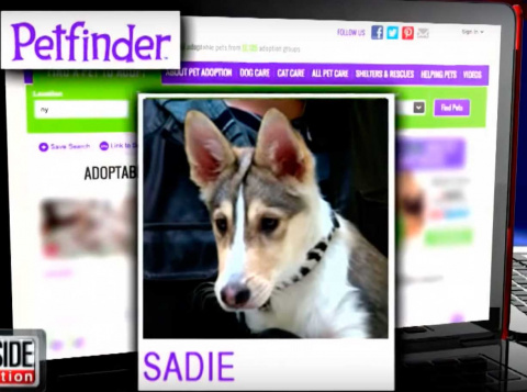 Он увидел этого пса на сайте приюта, снял все свои деньги и преодолел 2500 км, что бы забрать его