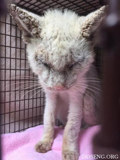 Спасенный бездомный кот удив…