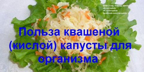 Польза квашеной  капусты для…