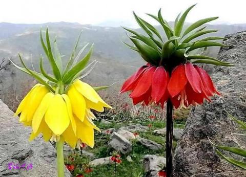 Цветы, которых вы наверняка …