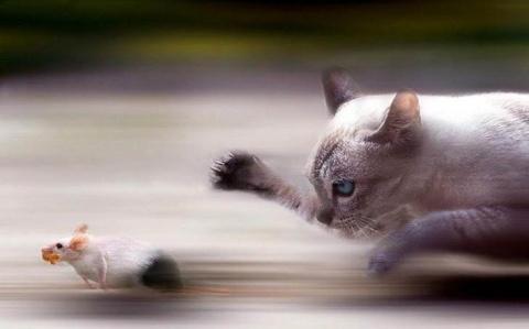 Хитрый кот придумал, как кор…