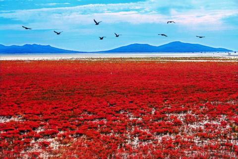 Заповедник Шуантай-Хэкоу и Красный берег Панцьзинь