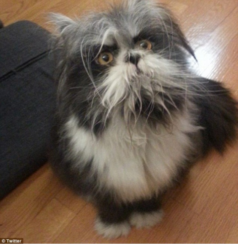 Кошка или собака? Загадка из…