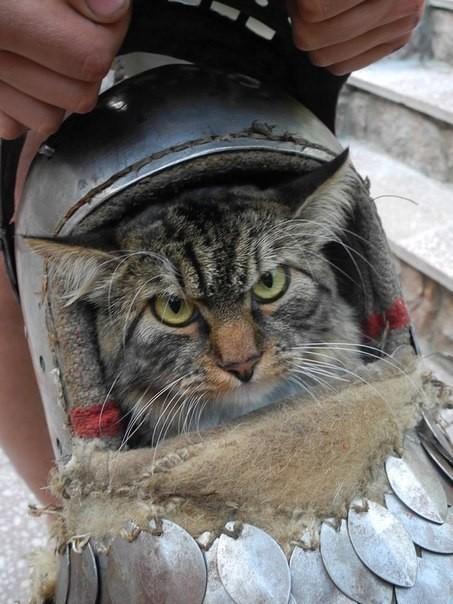 Я - кот! Мне так удобно!