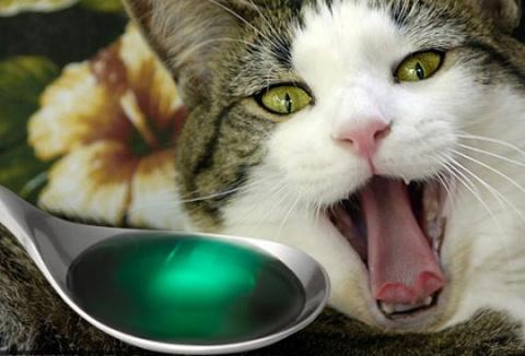 Отравление у кошек – заботим…