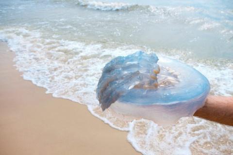 Друга ужалила медуза, но спа…