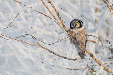 Челябинский фотограф-анималист приручил редкую краснокнижную птицу