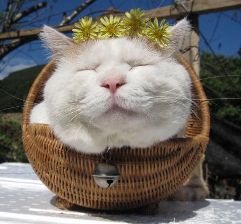 20 самых знаменитых кошек в …