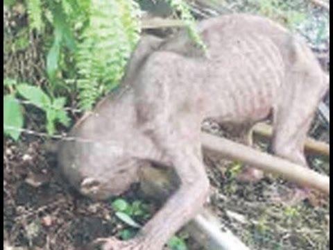 Испуганные жители деревни избили «внеземное» существо...