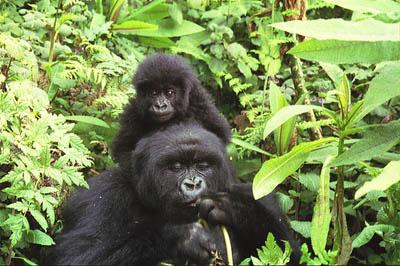 10 бесценных видов животных,…