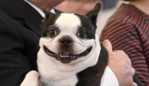 Собака финского президента с…