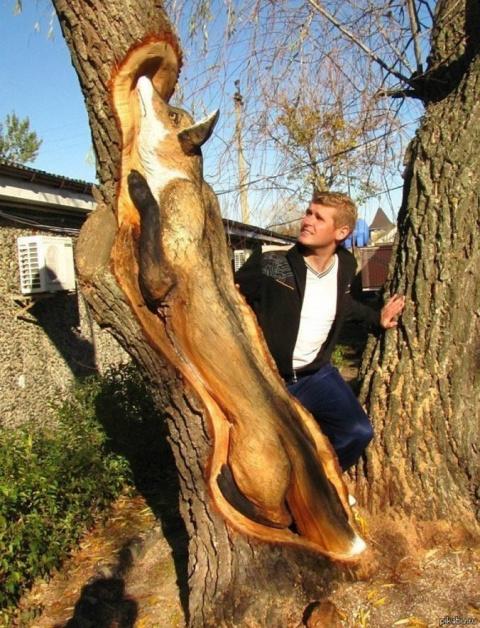 Парень вырезал из дерева Лис…