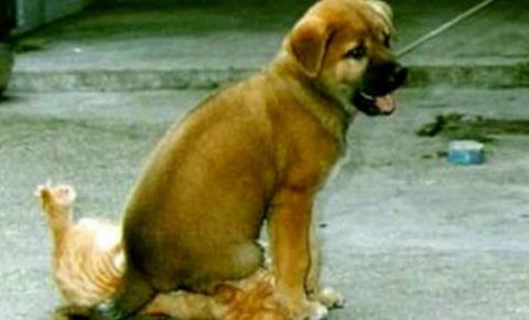 Собаки-хулигаки, указывающие…