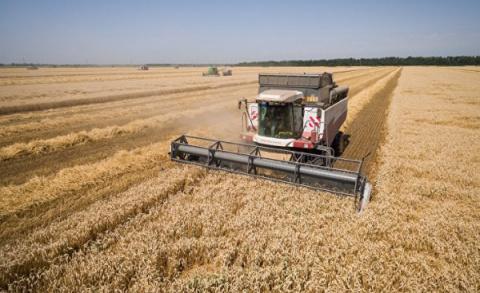 Россия завоевывает пшеничную…