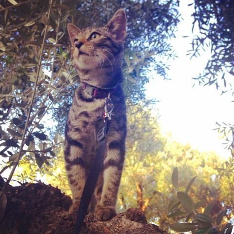 История о котенке из приюта,…