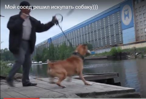 Мой сосед решил искупать собаку)))