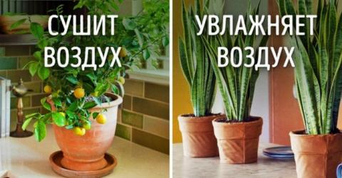 10 растений для идеального м…