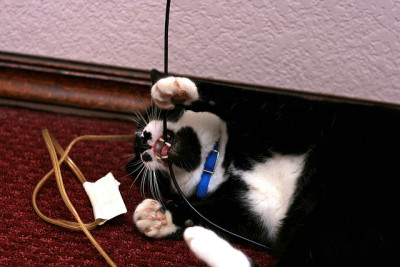 КОШКИН ДОМ. Как отучить кошку грызть провода