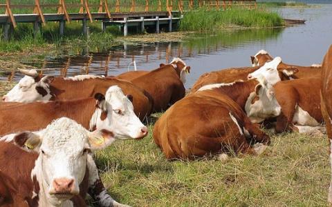 Латвийский фермер: Годманис …