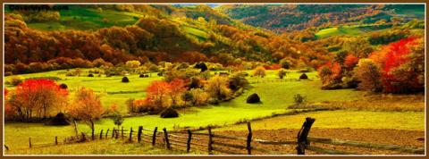 Вот листья снова золотые...