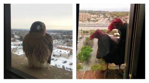 Вот так выглядит дружба птиц…