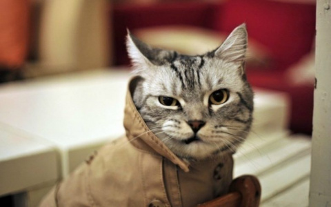 Кошка, которая спасла брошен…