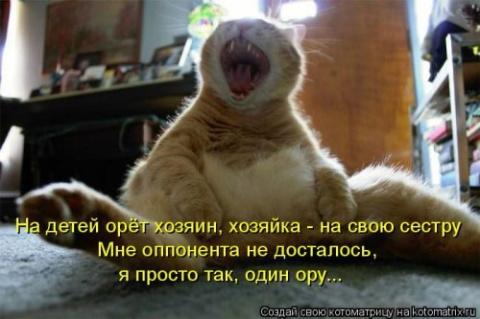 Праздничная котоматрица
