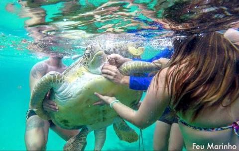 Как спасали морскую черепаху с крюком в шее