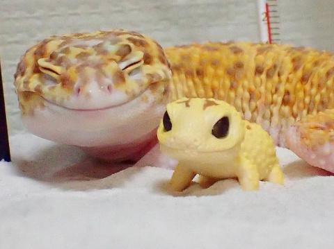 Милота дня: улыбающийся геккон
