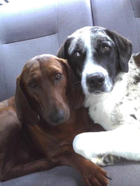 Собака отказалась покидать приют без своего лучшего друга.