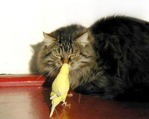Попугай пришел к коту, чтобы…