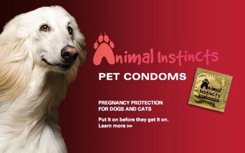 В США рекламируют презервативы для животных