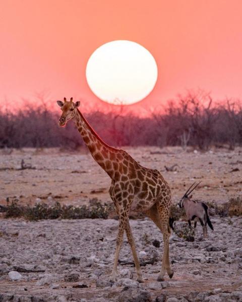 Удивительная природа в путешествиях Эрин Салливан