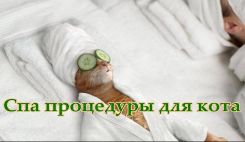 SPA процедуры для кота Григория